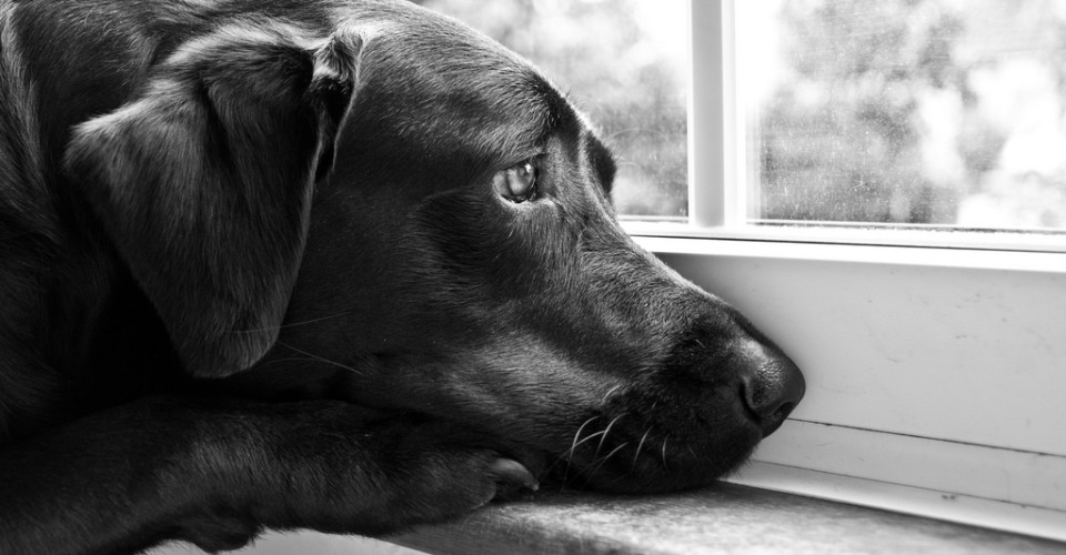 how to tell if your dog is depressed or lonely